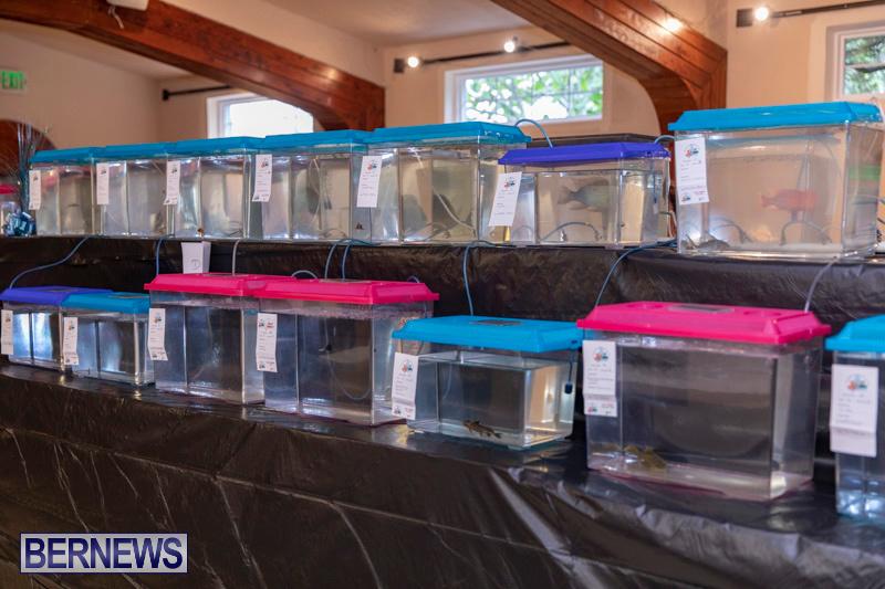 Fry-Angle-Aquarium-Fish-Show-Bermuda-November-17-2018-9202