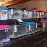 Fry-Angle Aquarium Fish Show Bermuda, November 17 2018-9203