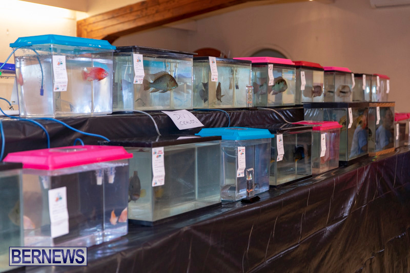 Fry-Angle-Aquarium-Fish-Show-Bermuda-November-17-2018-9203