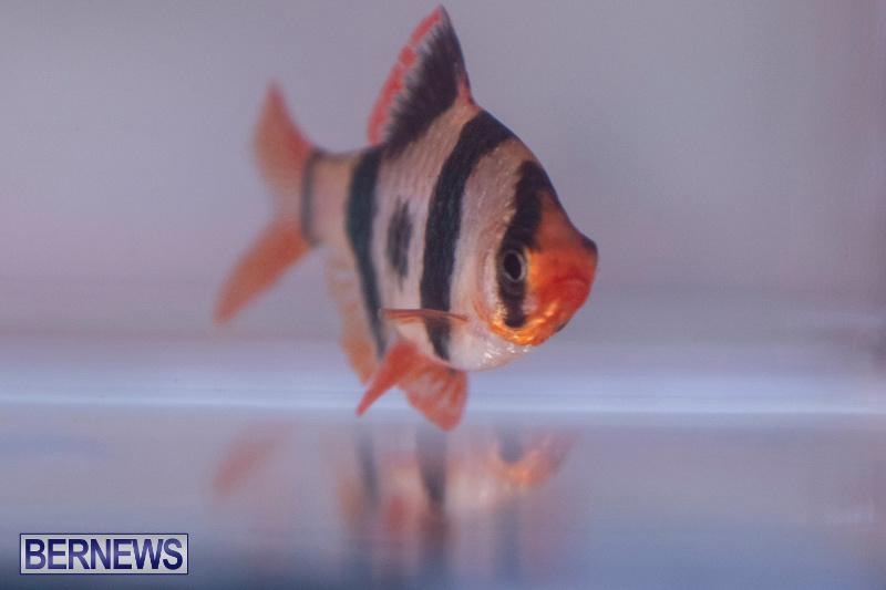 Fry-Angle-Aquarium-Fish-Show-Bermuda-November-17-2018-9269
