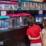 Fry-Angle Aquarium Fish Show Bermuda, November 17 2018-9278