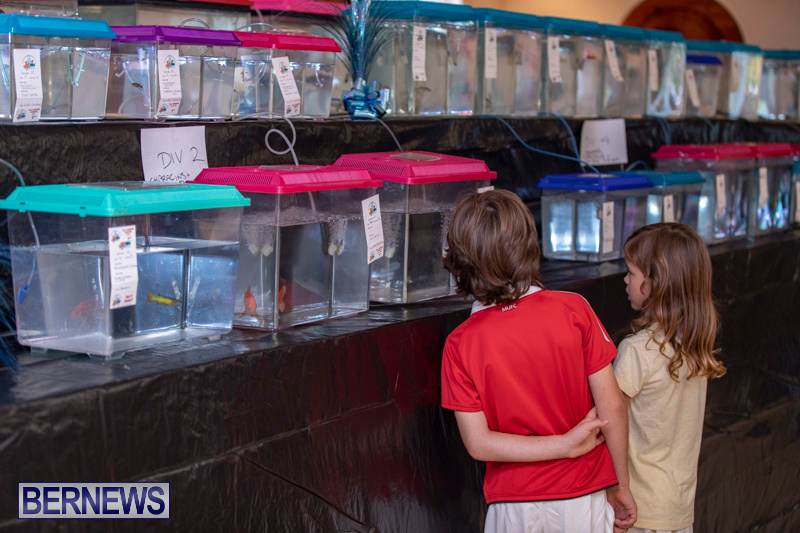 Fry-Angle-Aquarium-Fish-Show-Bermuda-November-17-2018-9278
