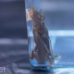 Fry-Angle Aquarium Fish Show Bermuda, November 17 2018-9311