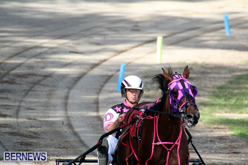 Harness-Pony-Bermuda-Nov-14-2018-10