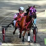 Harness Pony Bermuda Nov 14 2018 (11)