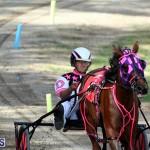Harness Pony Bermuda Nov 14 2018 (12)