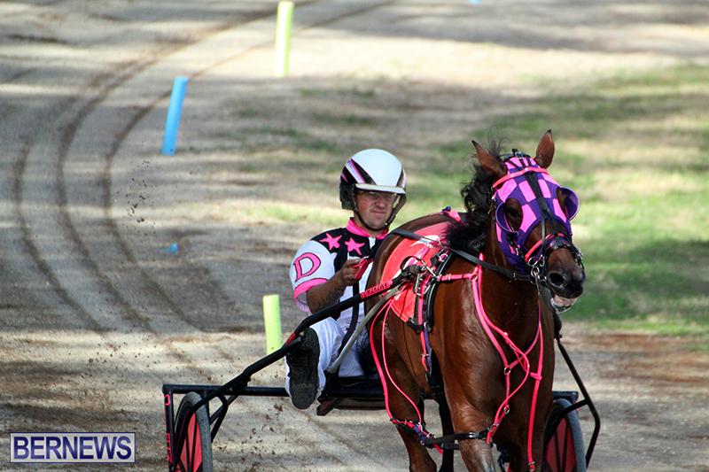 Harness-Pony-Bermuda-Nov-14-2018-12
