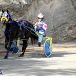 Harness Pony Bermuda Nov 14 2018 (14)