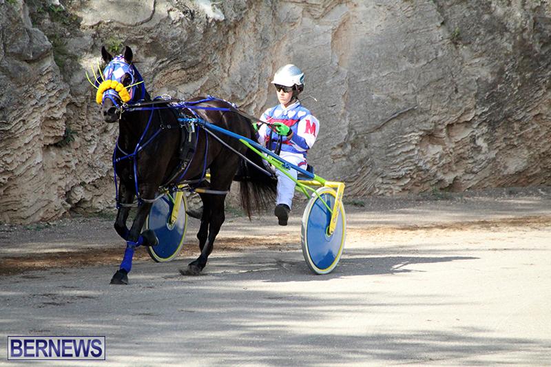 Harness-Pony-Bermuda-Nov-14-2018-14