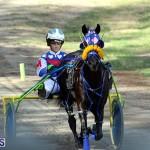 Harness Pony Bermuda Nov 14 2018 (17)