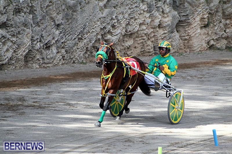 Harness-Pony-Bermuda-Nov-14-2018-19
