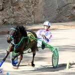 Harness Pony Bermuda Nov 14 2018 (3)