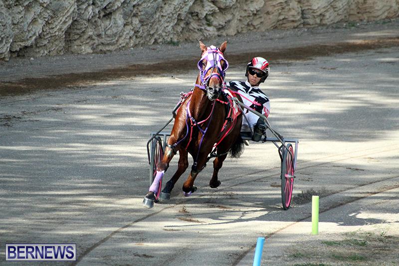 Harness-Pony-Bermuda-Nov-14-2018-6