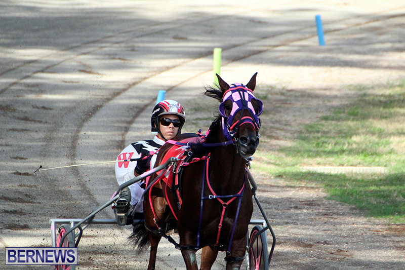 Harness-Pony-Bermuda-Nov-14-2018-7