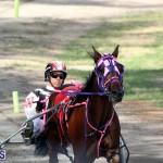 Harness Pony Bermuda Nov 14 2018 (8)
