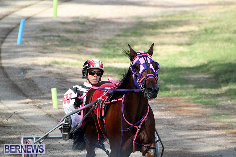 Harness-Pony-Bermuda-Nov-14-2018-8