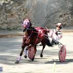 Harness Pony Bermuda Nov 14 2018 (9)