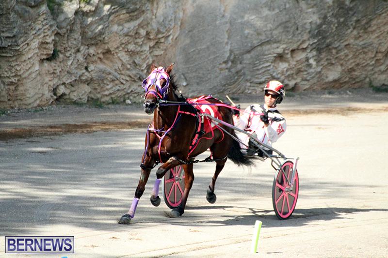Harness-Pony-Bermuda-Nov-14-2018-9