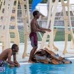 Student Cardboard Boat Challenge Bermuda, November 15 2018-8638