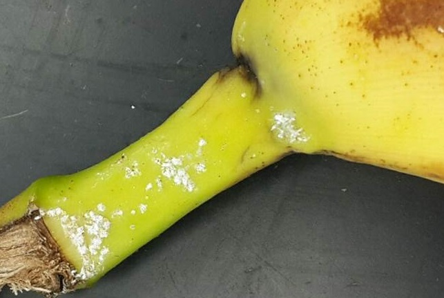 scale banana cropped
