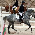 Equestrian Bermuda Jan 16 2019 (1)