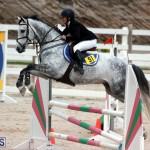 Equestrian Bermuda Jan 16 2019 (16)