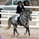 Equestrian Bermuda Jan 16 2019 (2)