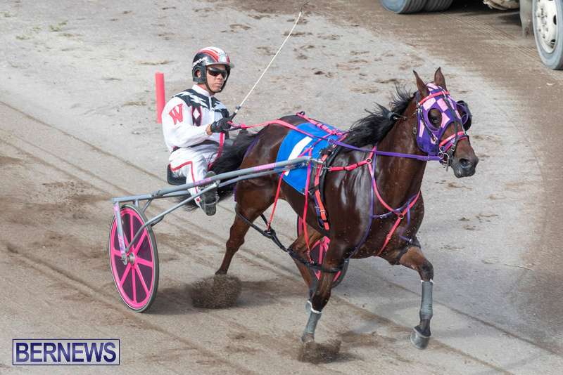 Harness-Pony-Racing-Bermuda-January-1-2019-6611