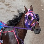Harness Pony Racing Bermuda, January 1 2019-6625