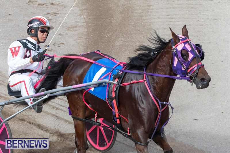 Harness-Pony-Racing-Bermuda-January-1-2019-6626