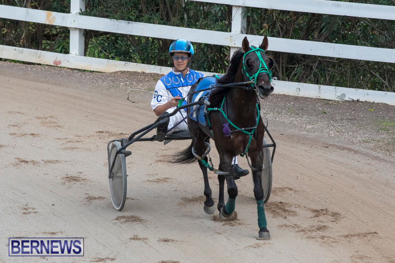 Harness-Pony-Racing-Bermuda-January-1-2019-6650