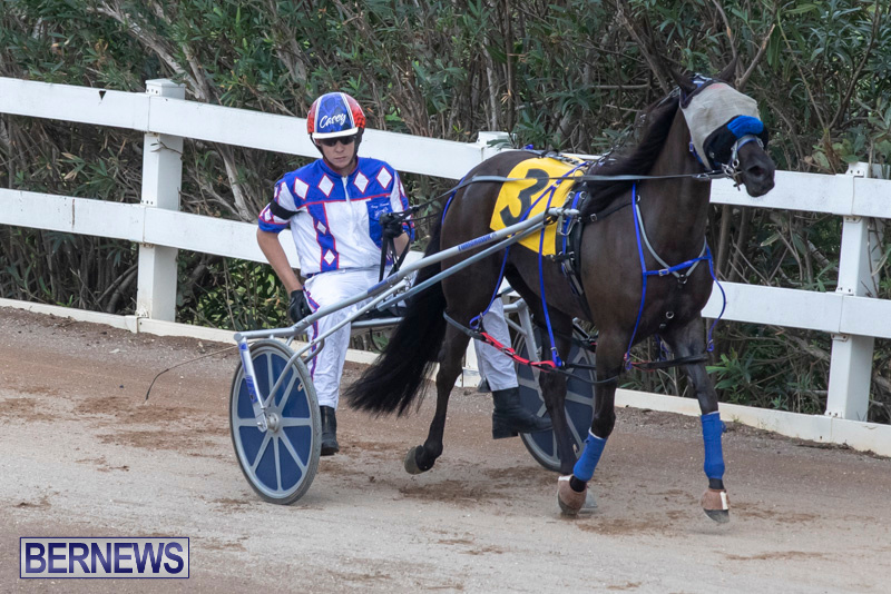 Harness-Pony-Racing-Bermuda-January-1-2019-6652