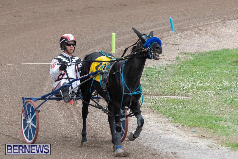 Harness-Pony-Racing-Bermuda-January-1-2019-6659