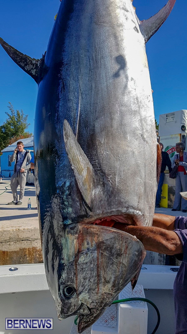 Paradise One Bluefin Tuna Bermuda, January 12 2019-50-4