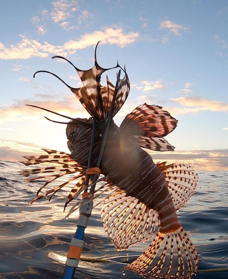 Fifth Winter Lionfish Derby Bermuda Feb 2019 (11)