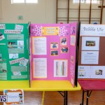 Purvis Primary Science Fair Bermuda, February 21 2019-9294