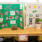Purvis Primary Science Fair Bermuda, February 21 2019-9306