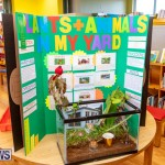 Purvis Primary Science Fair Bermuda, February 21 2019-9310