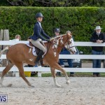 BHPA Bermuda Horse Pony Association Spring Show, March 24 2019-6168