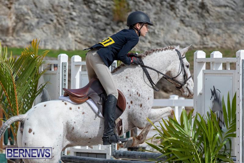 BHPA-Bermuda-Horse-Pony-Association-Spring-Show-March-24-2019-6203