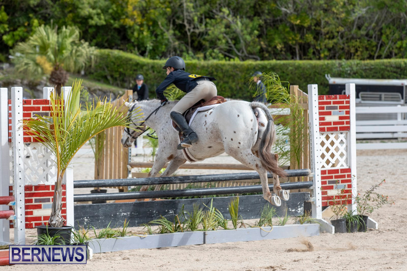 BHPA-Bermuda-Horse-Pony-Association-Spring-Show-March-24-2019-6213
