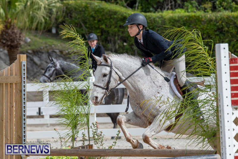 BHPA-Bermuda-Horse-Pony-Association-Spring-Show-March-24-2019-6223