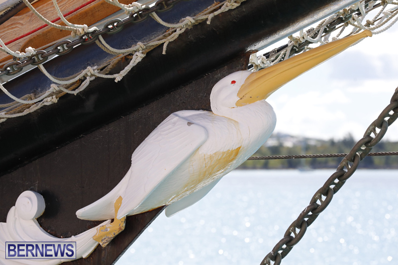 Pelican of London Bermuda March 15 2019 (4)