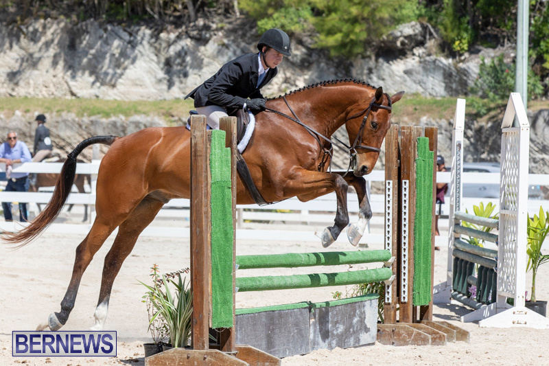 RES Hunter Jumper Show Bermuda, March 16 2019-0551