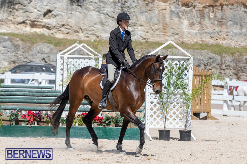 RES Hunter Jumper Show Bermuda, March 16 2019-0566