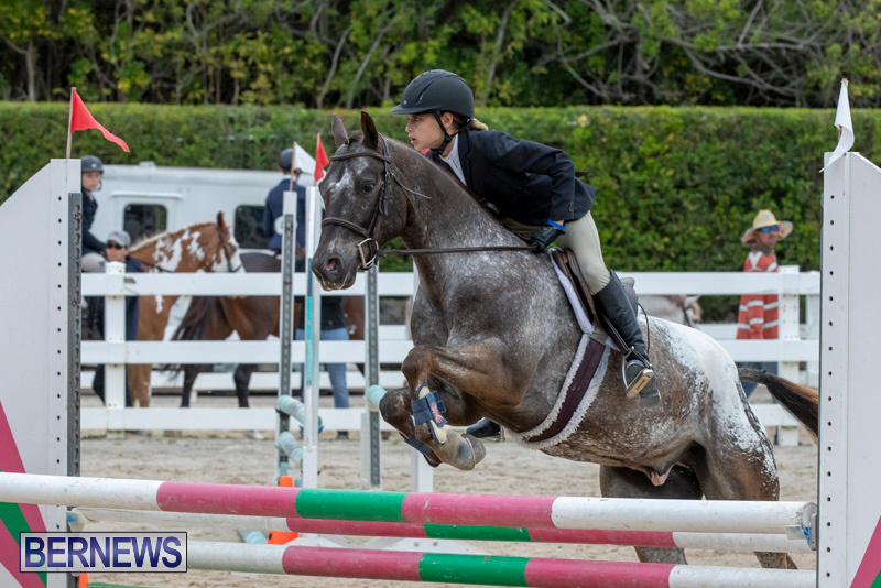RES-Hunter-Jumper-Show-Bermuda-March-17-2019-1559