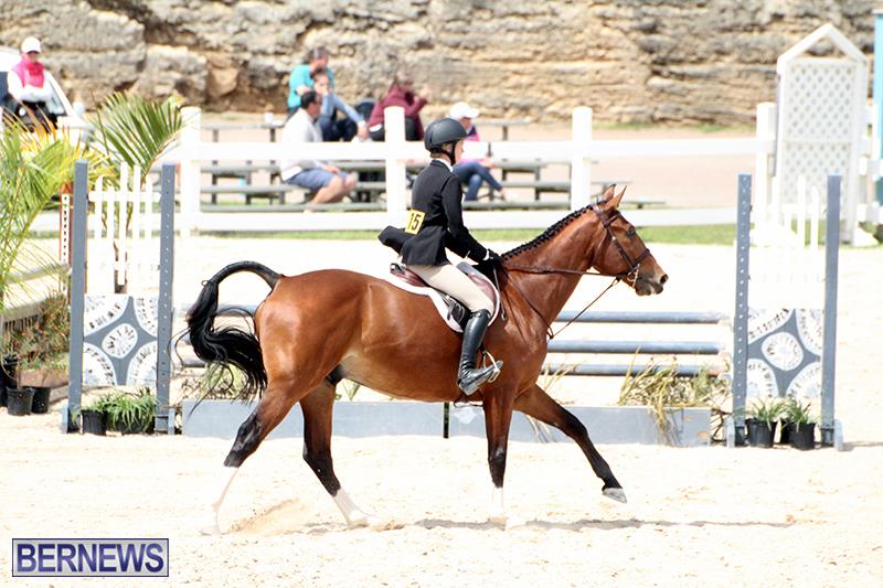 equestrian-Bermuda-Mar-27-2019-15