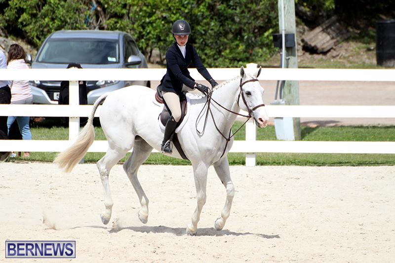 equestrian-Bermuda-Mar-27-2019-17
