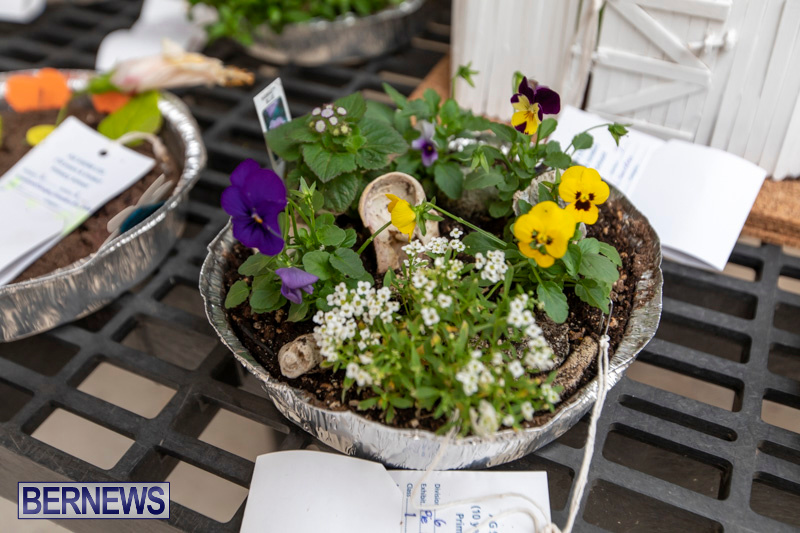 Ag-Show-Plants-Bermuda-April-10-2019-9359