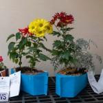 Ag Show Plants Bermuda, April 10 2019-9374